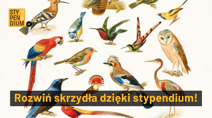 rysunek różnych gatunków ptaków m.in sowa,papuga, koliber
